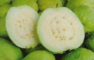 احترس عند أكل الجوافة يجب الانتباه لأمر هام