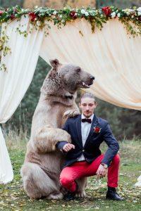 الدب والعريس