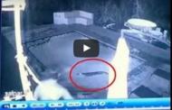 فيديو: تمساح يهاجم زوجين ليلا في المسبح !