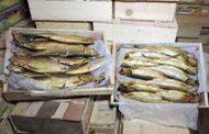 غلق مصنع رنجة ومصنع ثلج وسوبر ماركت وحلوانى ومطعم شهير بالقنطرة غرب بالإسماعيلية .