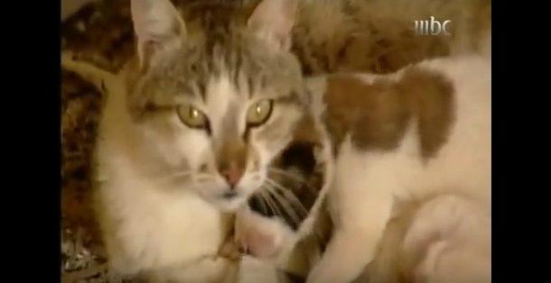 بالفيدو : قطة تلد كلبين لترضعهما وتخاف عليهم من الهواء لتمنع  فريق التصوير والسبب....