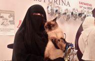 بالصور:أول مسابقة لملكة جمال القطط في مصر ..ورد فعل القطة الفائزة تجاه منتقديها ...