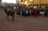 عبور بقرة من داخل مدرسة باحدى قرى محافظة المنوفية