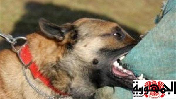 كلب ينهش جثة صاحبته في محافظة المنيا والسبب صادم