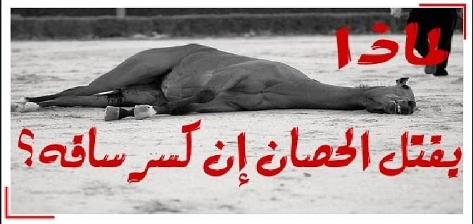 شاهد بالفيديو : لماذا يجب قتل الحصان اذا كسرت ساقه .....
