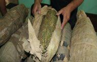 ضبط عاطل وبحوزتع عدد 22 لفافات من نبات البانجو و50 قرص من عقار التامول المخدر بميت زافر مركز الزقازيق - شرقية