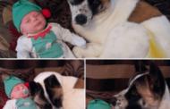 أم حامل تستغرب نباح كلبتها المتواصل…كانت الصدمة بعد نشرها الفيديو على مواقع التواصل مما أذهل الأطبّاء!
