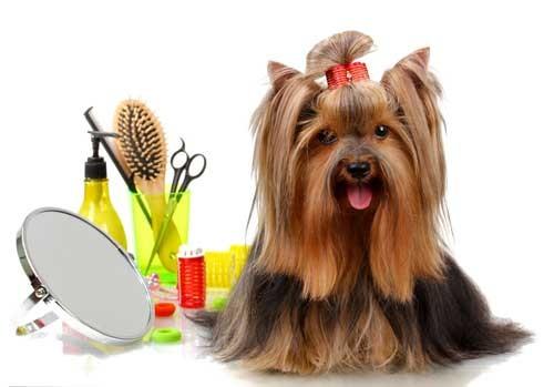 انجزي تسريحة شعر كلبك المفضل في خطوات