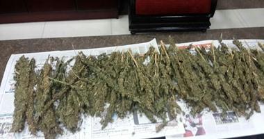 ضبط عاطل وبحوزته ( 3 ) كيلو جرام من مخدر البانجو وفرد خرطوش بمشتول السوق - شرقية