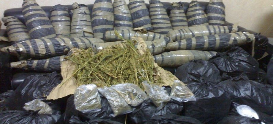 سقوط امد كرشه وبحوزته عدد ( 14 ) لفافه من نبات البانجو المخدر ببلبيس - شرقية