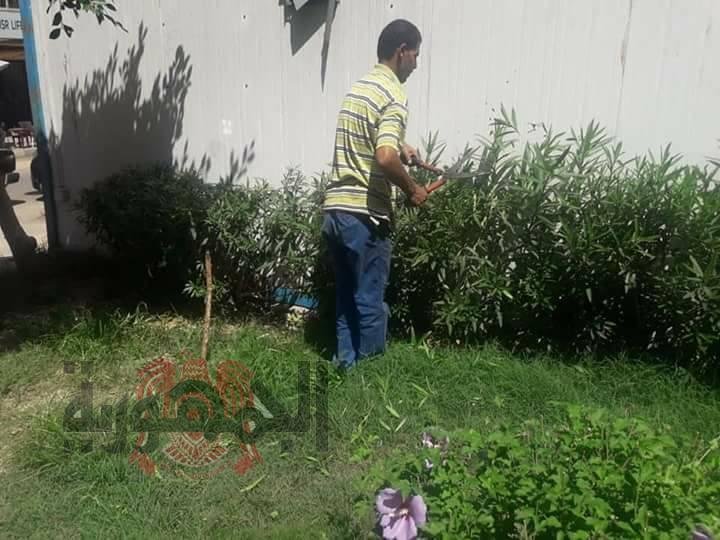 استمرارا لعمليات التجميل المسطحات الخضراء بنطاق حى المنتزه اول بالاسكندرية