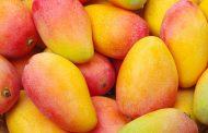 328 مليون دولار اجمالى صادرات الإسماعيلية من المحاصيل الزراعية من الخضروات والفاكهة خلال الثمانية أشهر الماضية.