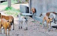 بيطري الفيوم يشن حملة لاعدام الكلاب الضاله