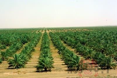 خبير زراعى يؤكد : تخفيض قيمة تقنين الأراضى المستصلحة يضاعف التنمية الزراعية