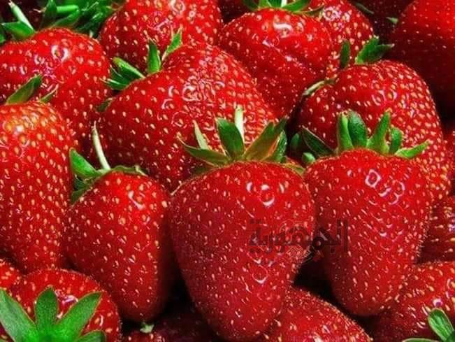 550 مليون دولار صادرات الاسماعيلية من الخضروات والفاكهة خلال 2018 بزيارة 38% عن الأعوام السابقة ..