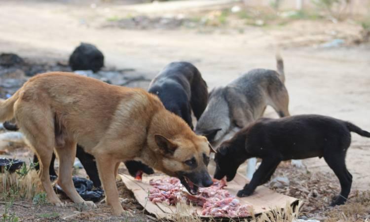 العثور على رضيع أكلت الكلاب جسده بالدقهلية
