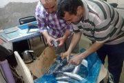 ضبط أسماك مجمدة مجهولة المصدر وبدون بيانات داخل ثلاجة بالإسماعيلية