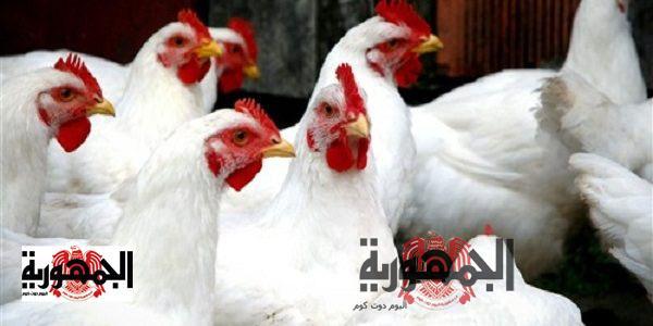 أسعار الدواجن الأربعاء  8-4-2020 في مصر
