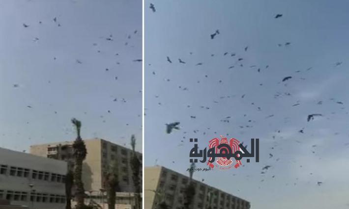 بالفيديو...ظهور اسراب من الخفافيش يثير ذعر المواطنين بالسعودية