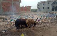 استغاثة بالصور..قرية السيالة بدمياط تغرق بالصرف الصحي والقمامة تقفل الطرقات
